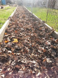 Then I put some extra carbon-rich material -- oak leaf mulch we had raked up in the fall.