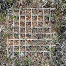 Planting grids